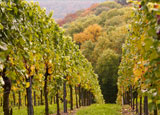 Tour the Vineyards Package at California Hotel